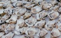 oesters cut
